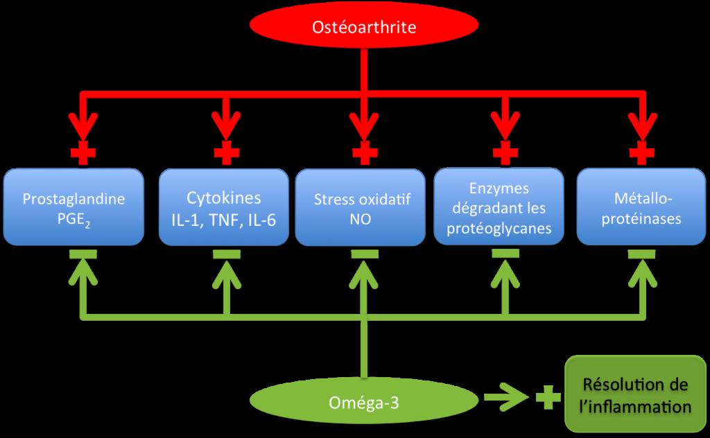 Oméga -3 DHA: activité pharmacologique